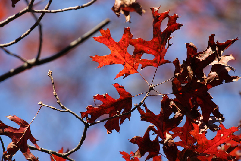 Autumn in NY.
