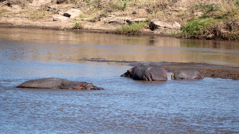 Tanzania-Serengeti-National-Park-Safari-Hippo-04.jpg