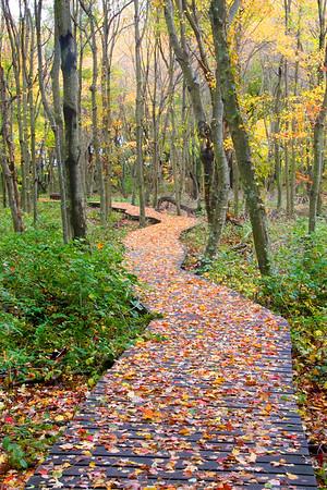 Daniel Webster Wildlife Sanctuary
