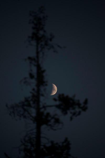 Pine Moon.jpg