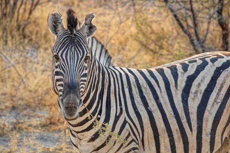 Namibia 69A7586.jpg