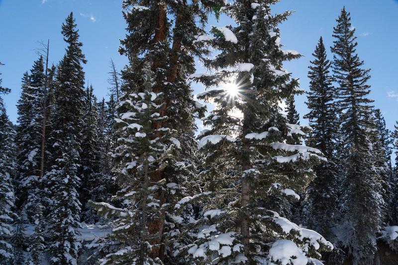 _AR70947 Pine starburst.jpg