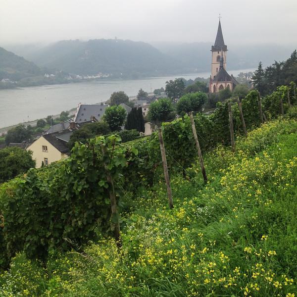 RhineValley_2.jpg