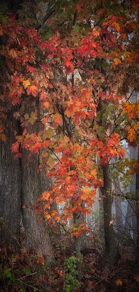 Penn Barns-3066-Edit.jpg