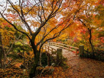 Autumn at Sankeien Garden, Yokohama, image copyright SATHIANPONG PHOOKIT / Shutterstock.com