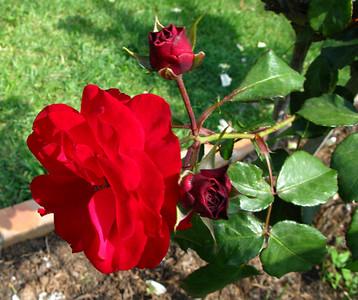 G9 Roses  Oct 07