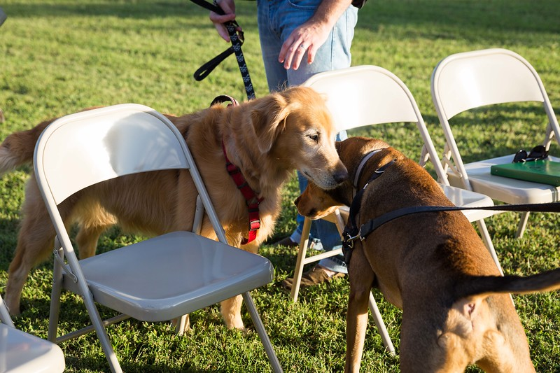Blessing of the animals 10-3-2017 (46).jpg