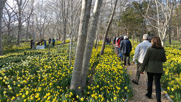 2015 Daffodil Party for DNRT Members