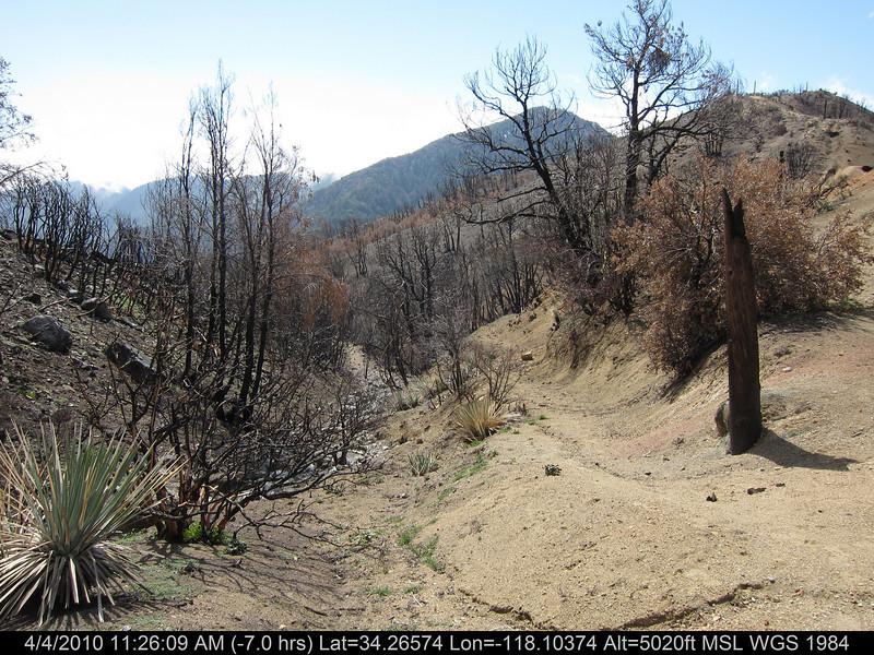 20100404068-Angeles National Forest, Strawberry Peak trail.JPG