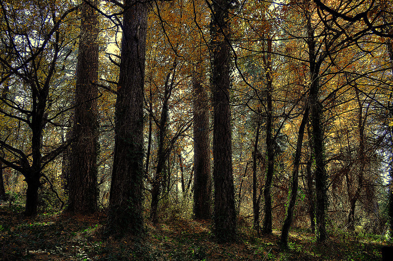 woods 5-25-2012.jpg