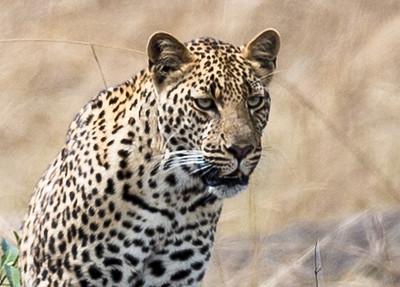 Kenya041.jpg