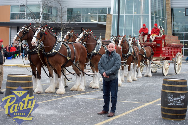 Clydesdale Portraits 5.jpg
