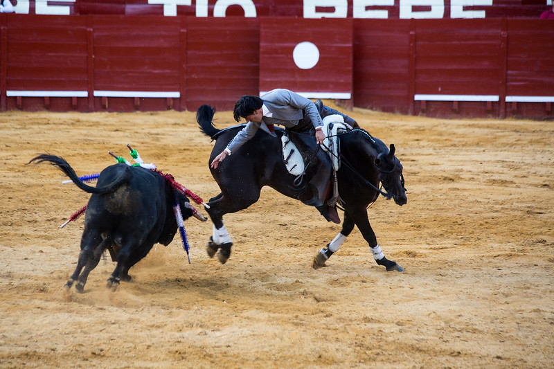 Bullfighting H34.jpg