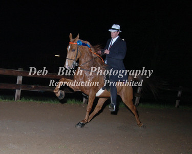 CLASS 41  RACKING  HORSE CHAMPIONSHIP