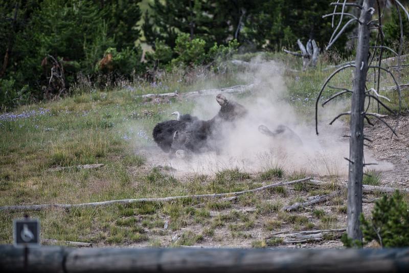 Yellowstone-16.jpg