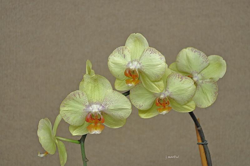 floral display 2 8-11-2011.jpg