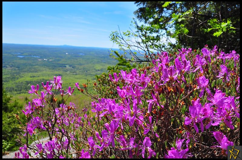 Purple Flowers 1.JPG