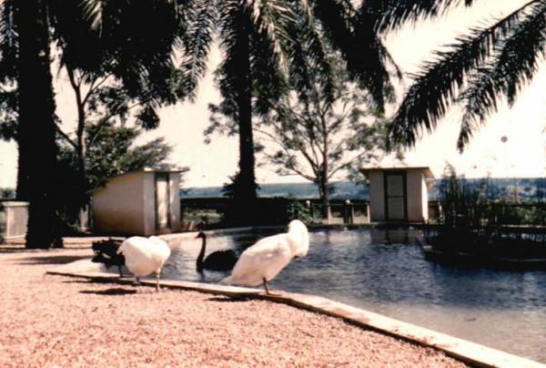 Dundo lago dos cisnes