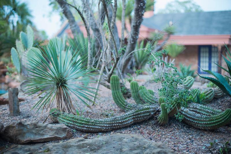 htx-cactus-space032.jpg