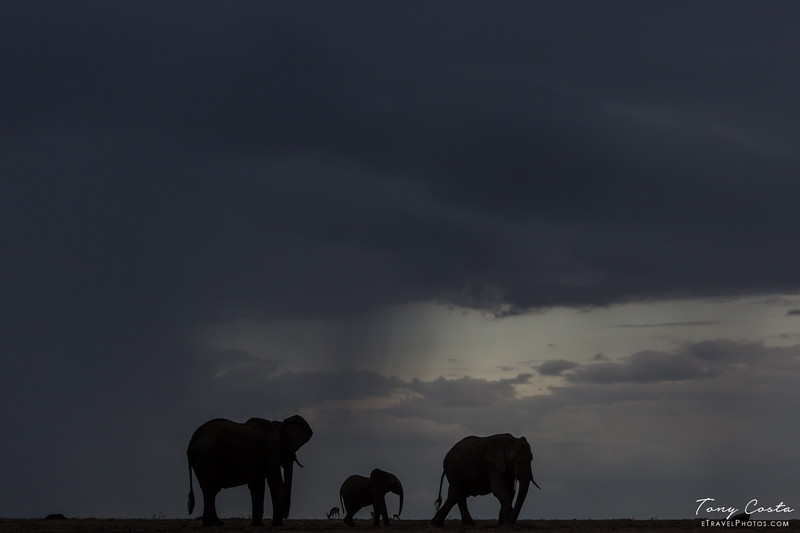 Elephants in a Storm