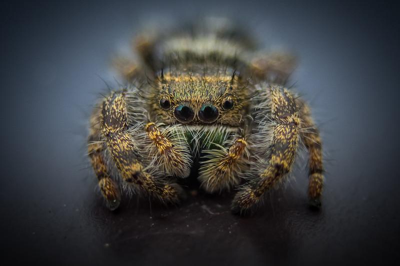 spider nov 2018-9132.jpg