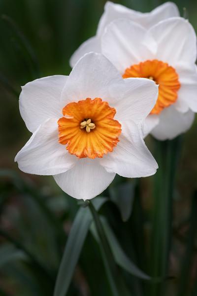 Flowers033019-904.jpg