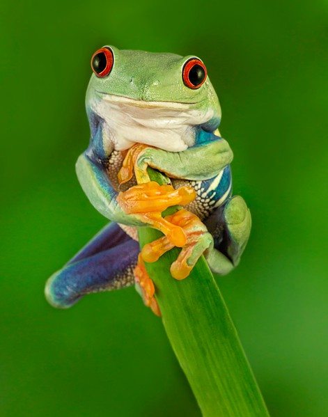 Frogscapes010_Cuchara_2716b_011913_172718_5DM3L_11x14 printed.jpg