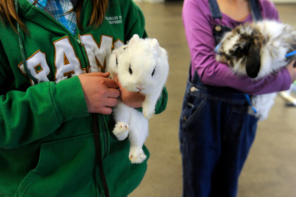 . BRIGHTON, CO - MARCH 25: Morgan Barba, 10, left and Kaiden Spirz, also 10, hold their rabbits Marcus and Prince, respectively, during hopping practice at the Adams County Fairgrounds Event Center on March 25, 2014, in Brighton, Colorado. Both girls are part of the Adams County Rabbit Hopping group, which is made up of eleven youngsters who participate in 4-H projects through Adams County. They are training for the Adams County Fair which will take place at the end of July. (Photo by Anya Semenoff/The Denver Post)