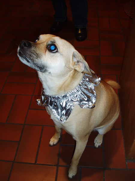Lili's pretty new collar