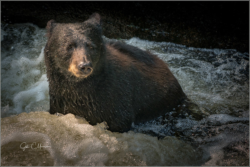 SR3_2388 Black Bear L W.jpg