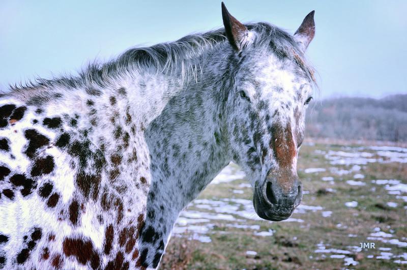 DSC_Horse of spots.jpg