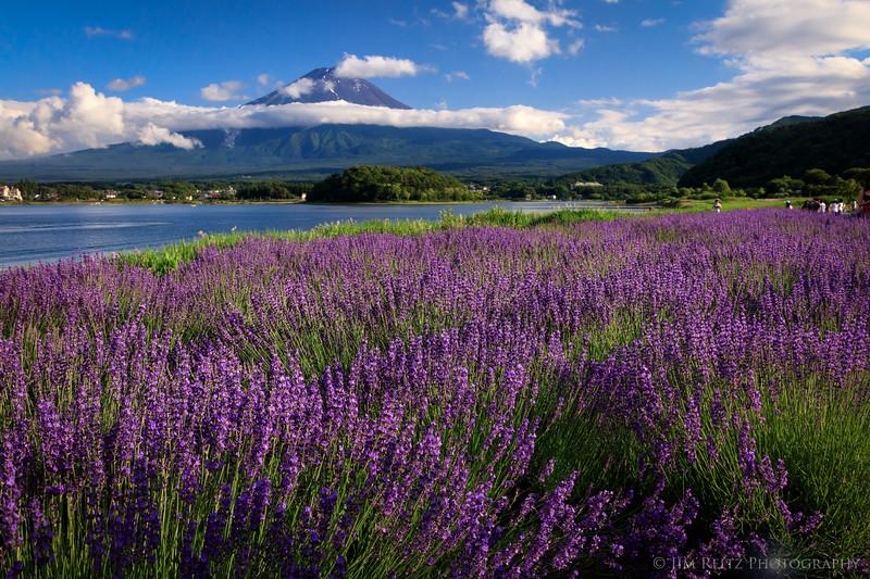Fuji Flowering