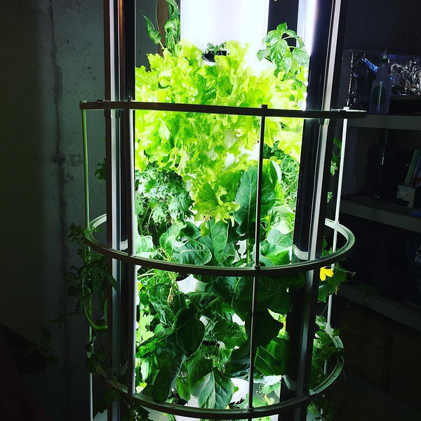 conscious-FreshGreenSmoothies_com-Vegan-Intelligent-Compassionate-raworganicvegan-plantbased-greensmoothies-OrganicGardeningArt-Art-Aeroponics1070.jpg