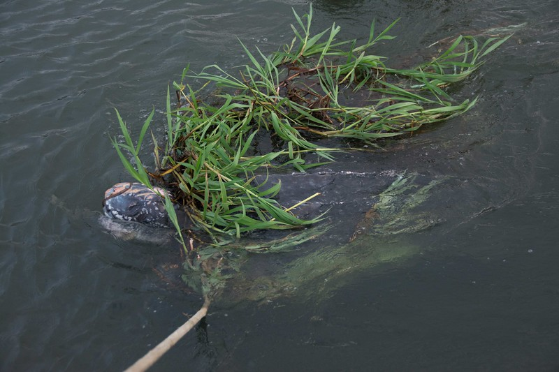 Turtle Rescue-5.jpg