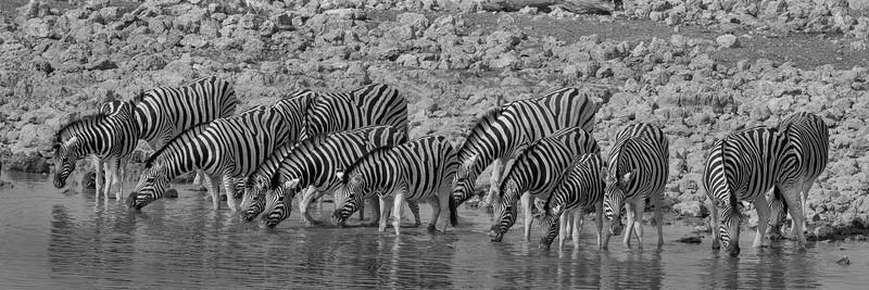 Namibia 69A7731.jpg