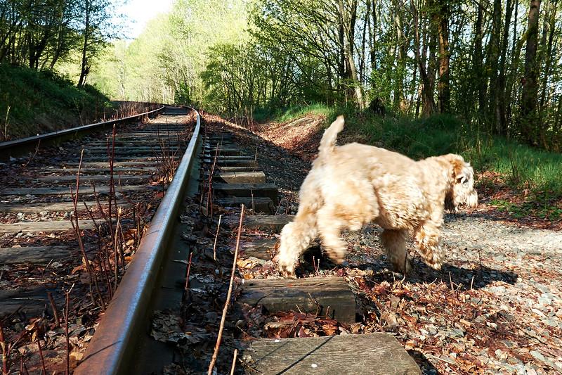 Olive_TracksTrail_IMG_1636.jpg