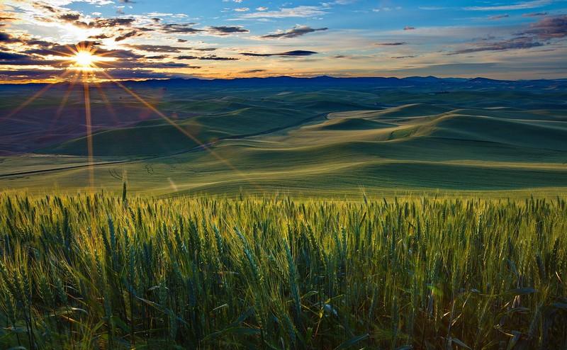106.Greg Stringham.1.Palouse Sunrise.jpg