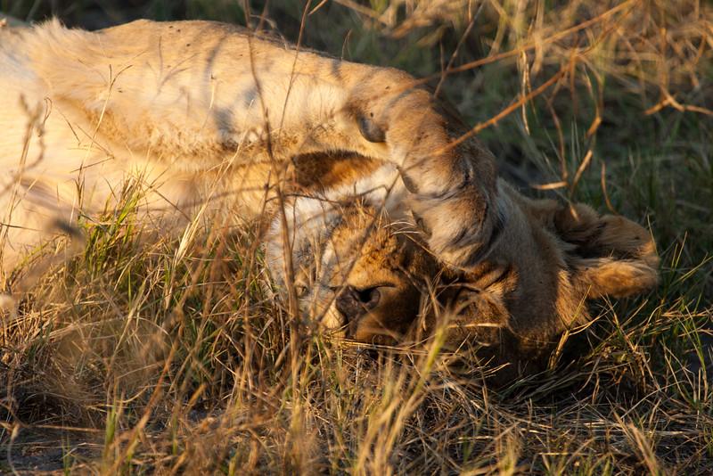Botswana-36.jpg