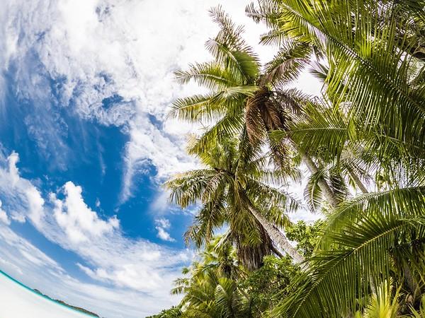 Tahiti Temp