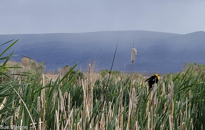05-19-2021 Summer Lake Wildlife Refuge-27.jpg