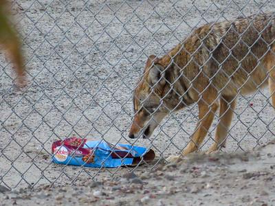 Coyotes & Kibble December 3 2018