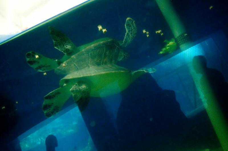 sea_life_park-3382.jpg