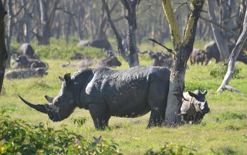 East Africa Safari 110.jpg