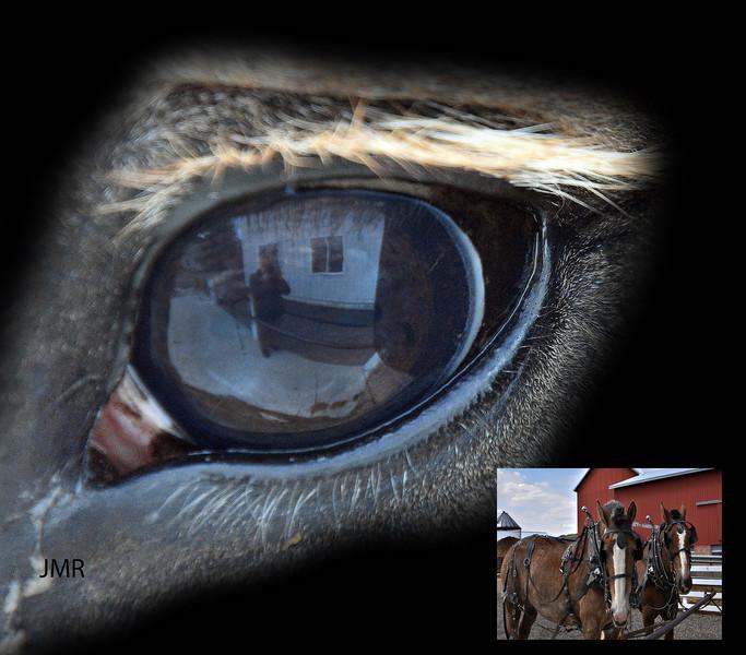 HORSE EYE-AMISH BELGIAN.jpg