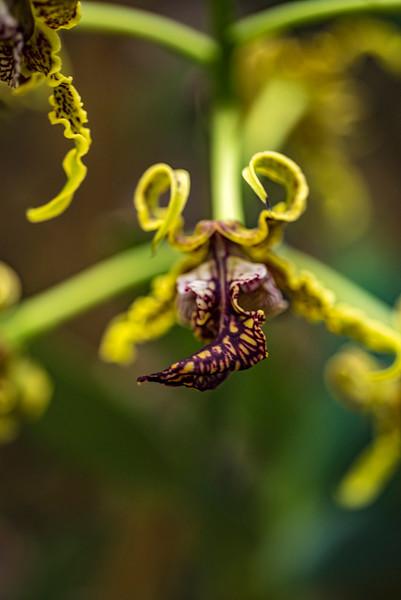 orchidroom-32.jpg