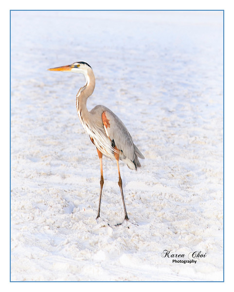 Heron on the beach sm.jpg