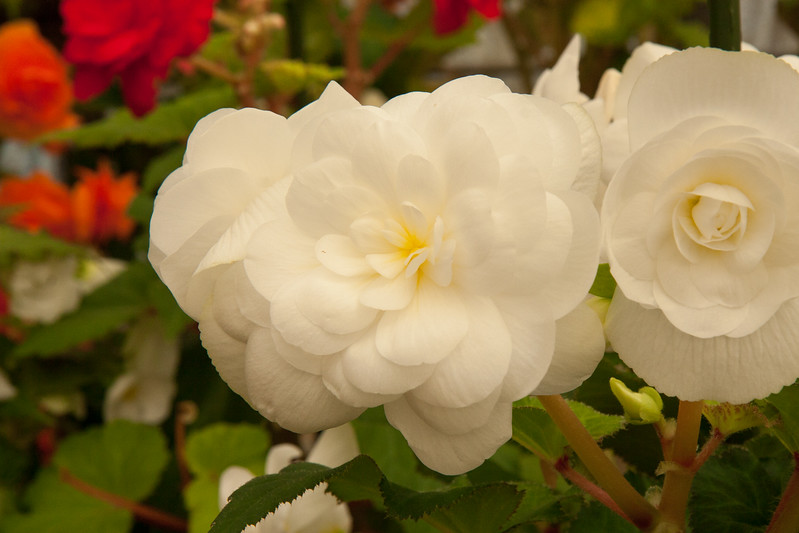 2009 09 06_White Flower Farm_0144.jpg