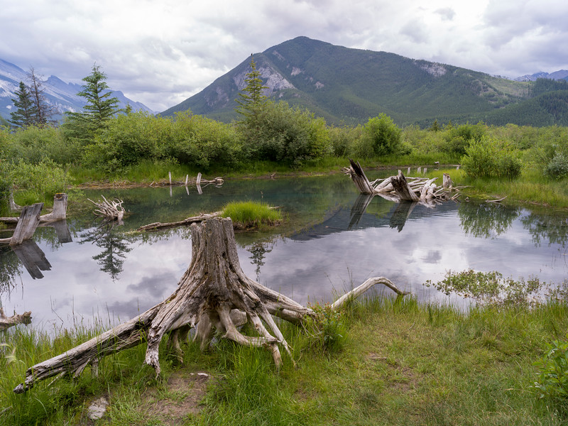 Dead trees around pond with mountain in the background, Canada