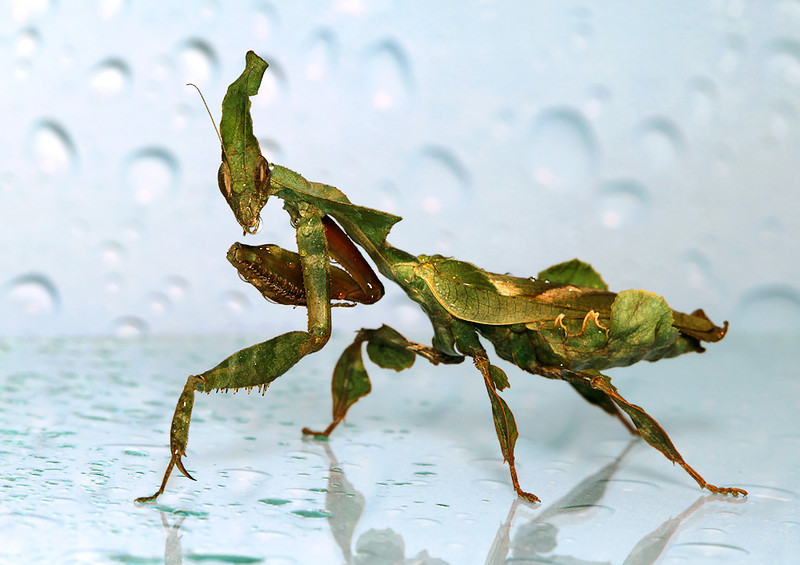 Wet Mantis.jpg