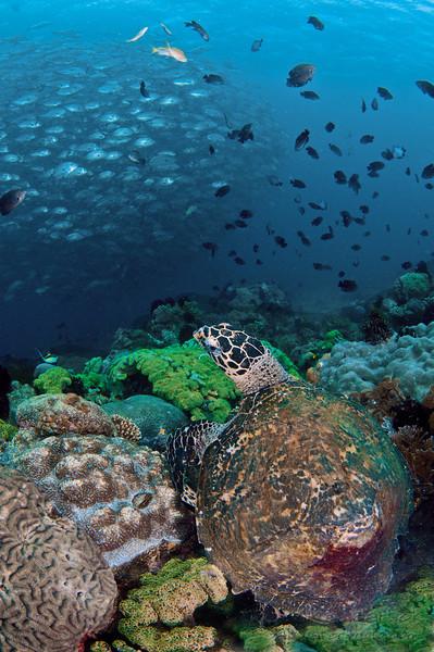 turtle n jacks-2.jpg
